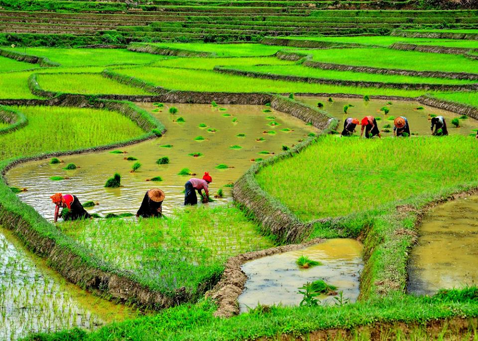 Myanmar remains a predominantly agrarian society, where approximately two thirds of the country's population continues to earn a living from the land.