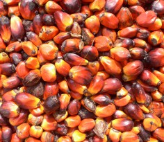 palm_oil_production_in_jukwa_village_ghana-04