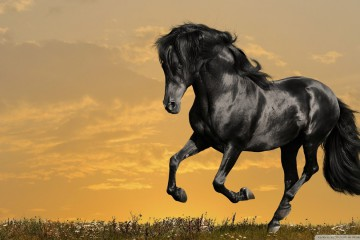 running-black-horse-hd-wallpapers-cool-desktop-background-images-widescreen