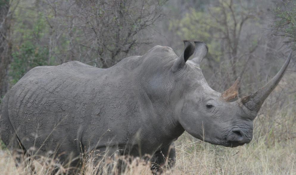 Craig_R_Sholley_rhino