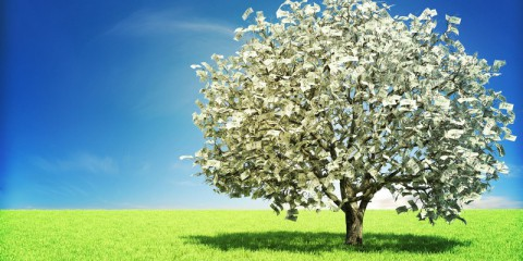 Blog_TheMoneyTree